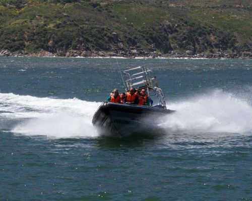 event idea south africa speed boat adventure