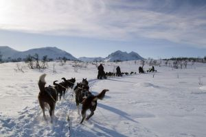 program idea dog sledding in norway