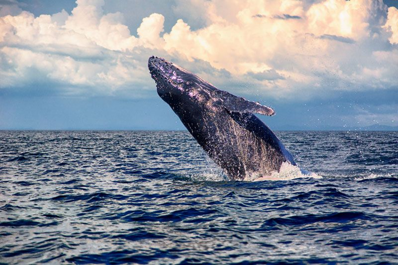 whale watching program idea panama